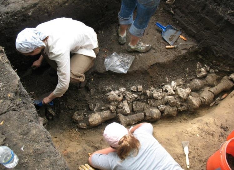 Column excavations